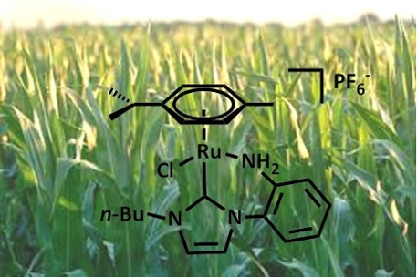 Chemistry for Biomass conversion